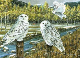 Cobble Hill 1000 pcs Puzzle - Snowy Owl Gathering